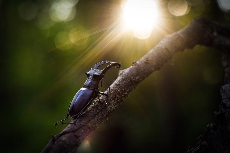 природа, путь, дорога, жук-олень, насекомые, макро, макрофото, красная книга, жуки, насекомые, вчувствование, жить и видеть, никон, \