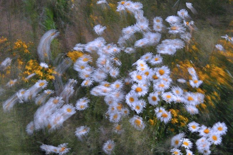 абстракция, цветы,акварель, ромашки Цветочная акварель.photo preview