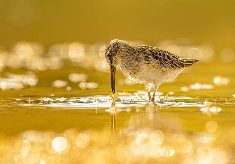 птицы,природа, осень \
