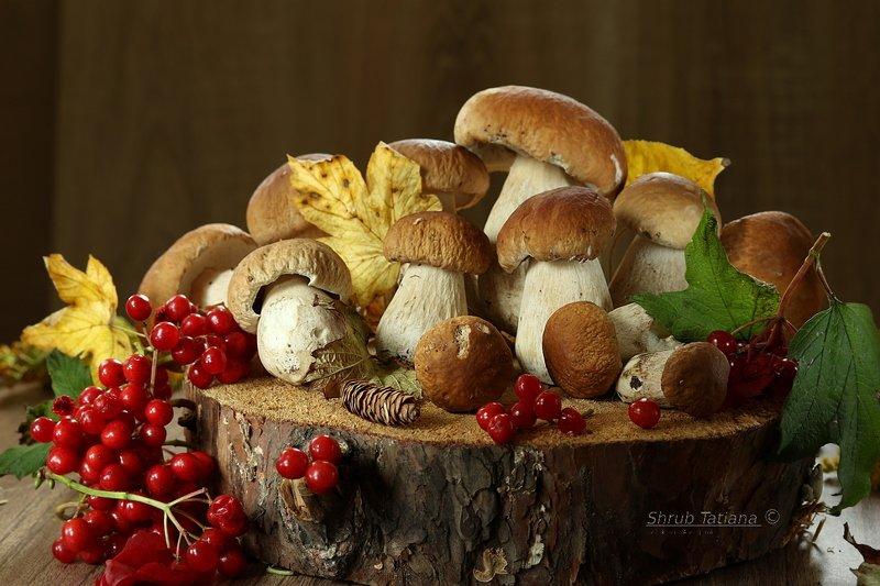 грибы, белые, пенек, калина Грибочки на пенечкеphoto preview