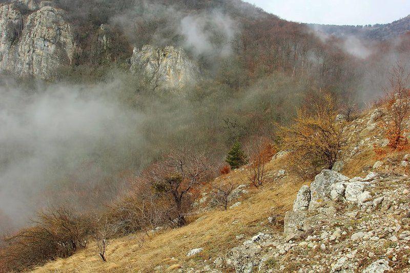 крым, демерджи, туман, лес, горы Про туманphoto preview