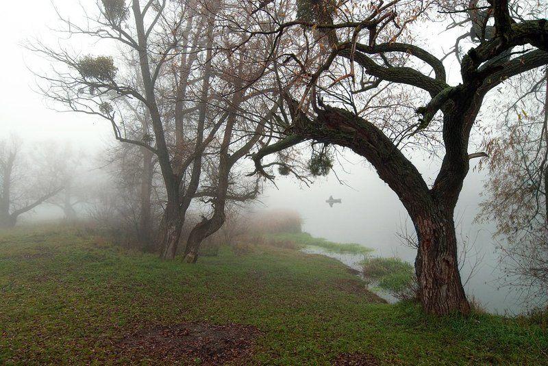 осень, туман, рыбак, утро. photo preview