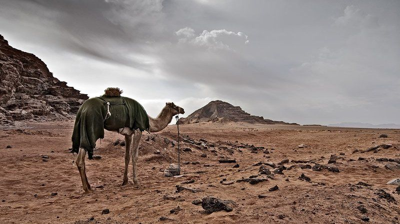 jordan, january, desert, camel, dreams, mars, иордания, январь, пустыня, верблюд, мечты, марс in dreams of Mars...photo preview