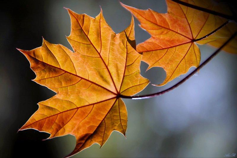 Осеннееphoto preview
