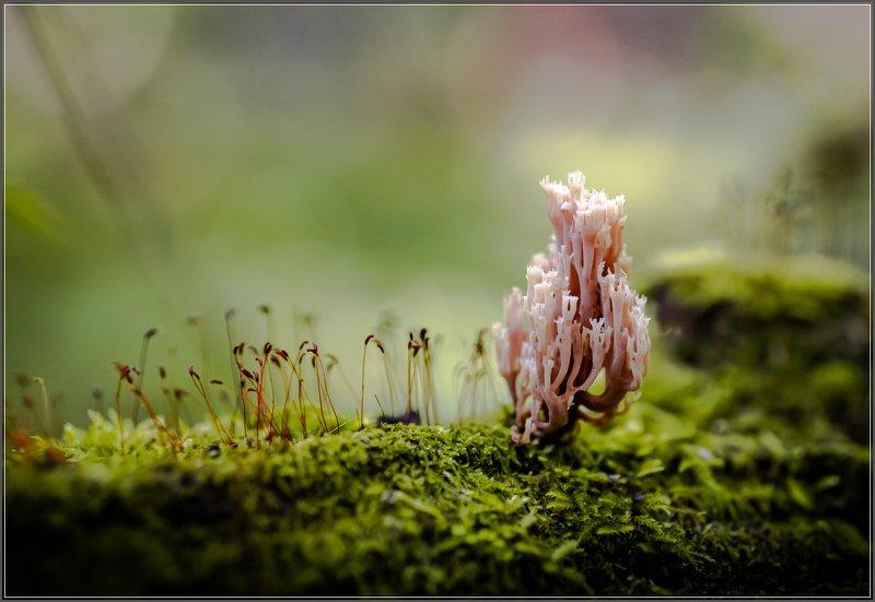 природа.грибы,лес Сказка осеннего лесаphoto preview