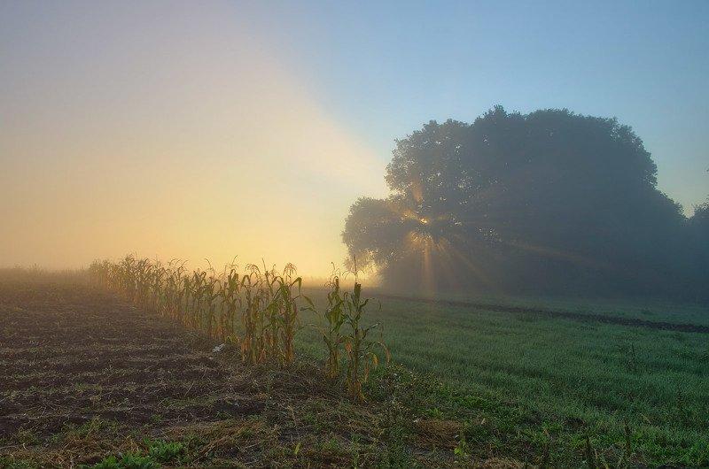 #nature, #туман, #лес, #oсень, #украина, #карпаты, #пейзаж, #закат, #туман, #солнце, #свет, #mountain range, #mountains, #туризм, #лес, #nature, #природа, ранокphoto preview