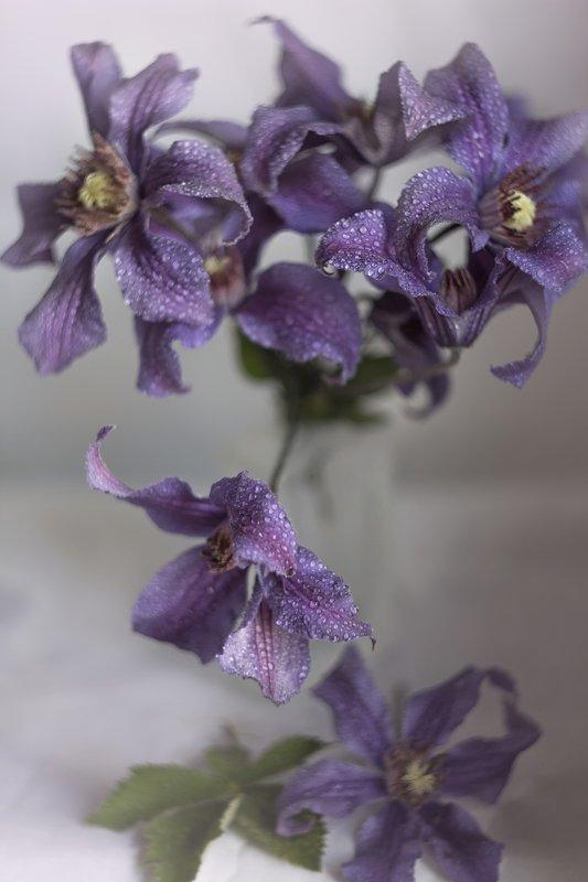Княжик, фиолетовые цветы, крупный план Фиолетовые...photo preview