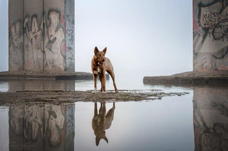 анималистика, портрет, пейзаж, отражение Туманное утроphoto preview