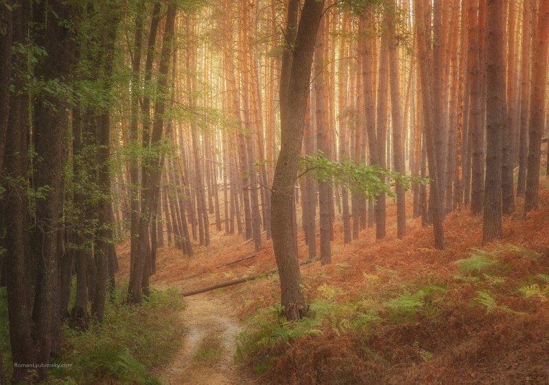 роман любимский, осень, воронеж, фототуры, россия, пейзаж Дорога в осеньphoto preview