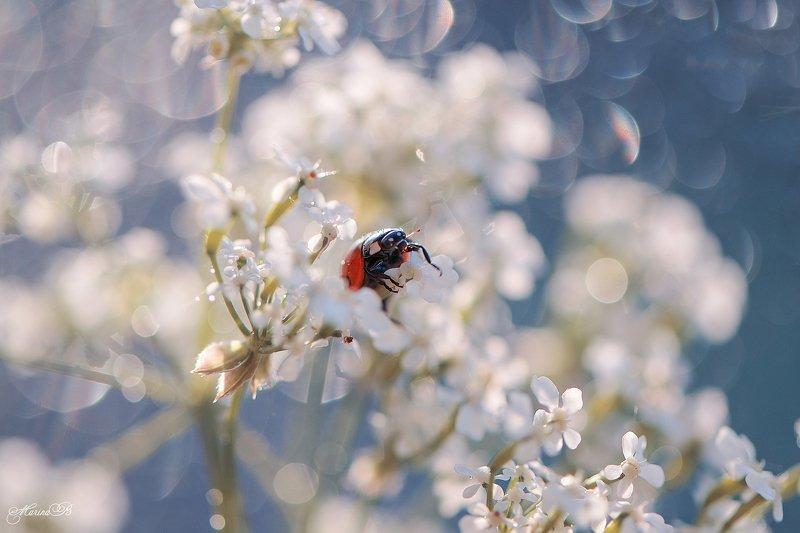 лето, цветок, капли, блики, божья коровка Божьей коровки пост (часть 1)photo preview
