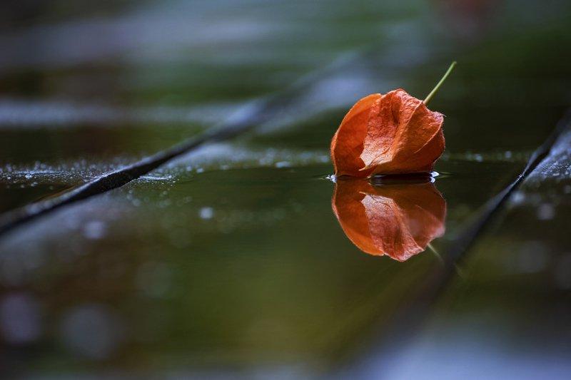 утро, пасмурно, осень Приметы осениphoto preview
