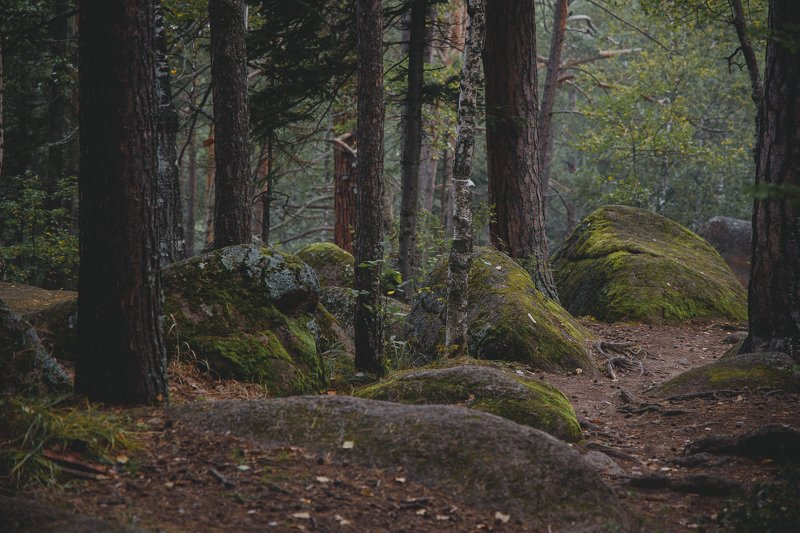 столбы, красноярские, пейзаж, красиво, лето, туман, заповедник, август, хайкинг, тревел, туризм У Первогоphoto preview