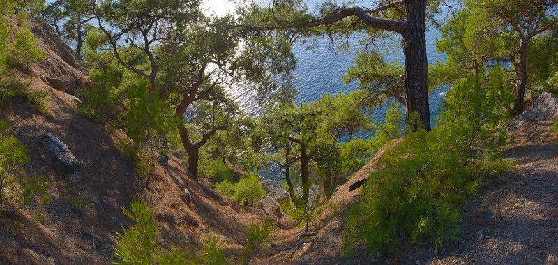 крым, мыс айя, сосны, море Дорога на пляжphoto preview