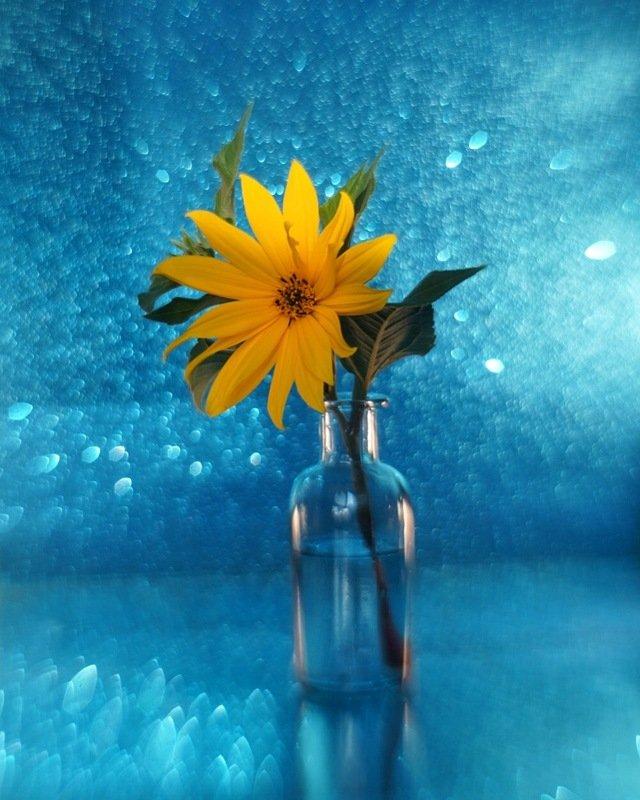 натюрморт цветок желтый синий гелиос боке stilllife yellow blue flower bokeh Желтыйphoto preview