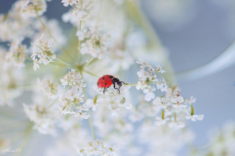 лето, цветок, капли, блики, божья коровка Божьей коровки пост (часть 2)photo preview