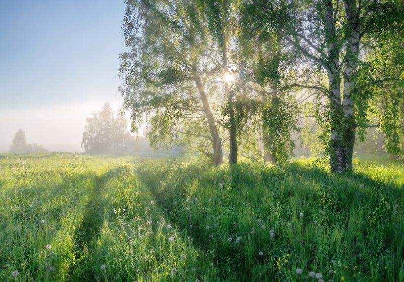 Тепло июньского солнцаphoto preview