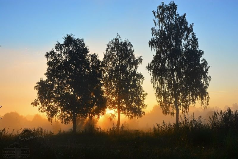 пейзаж, туман, рассвет, деревня, березы Три девицыphoto preview