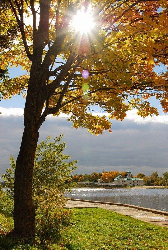город, псков, листья, клён,пейзаж,набережная, река, Золотая осень.photo preview