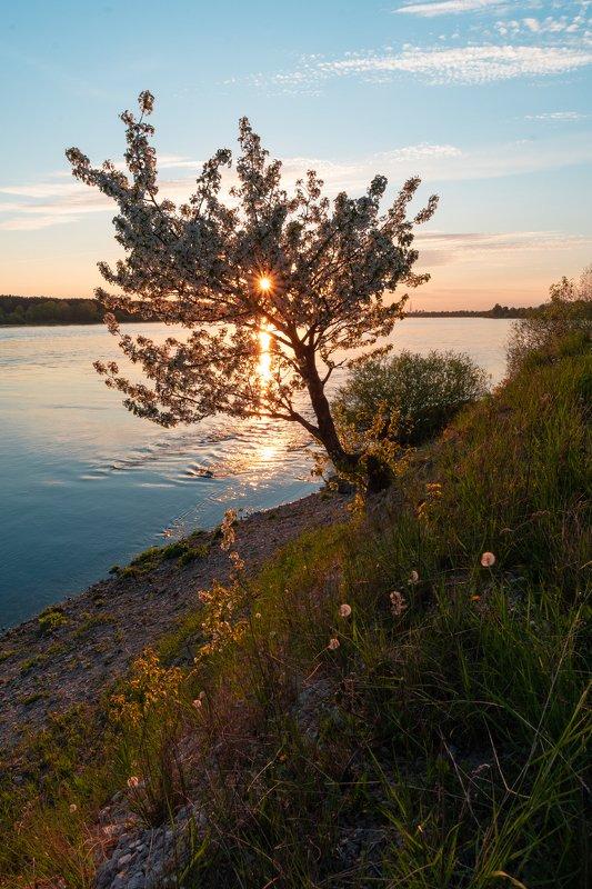 Цветущее деревоphoto preview