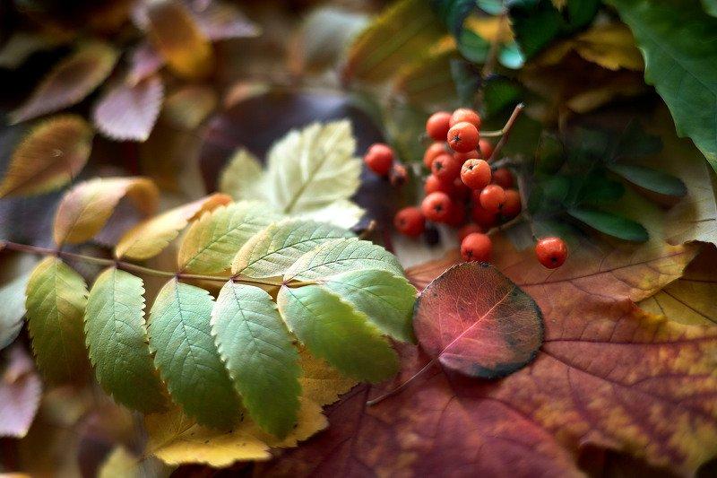южный урал,оренбургская область, орск, новотроицк, Осеннее настроение!photo preview
