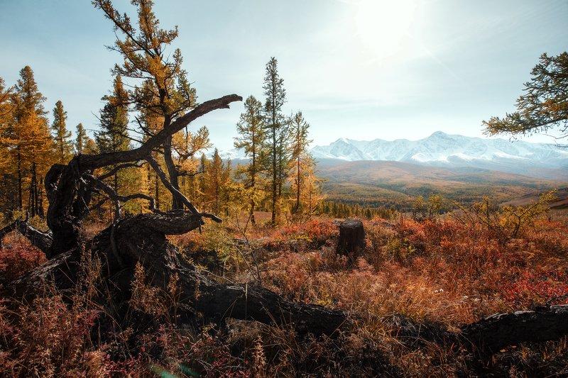 природа, пейзаж, закат, горы, осень, лес, mountain, nature, алтай Рассвет осениphoto preview
