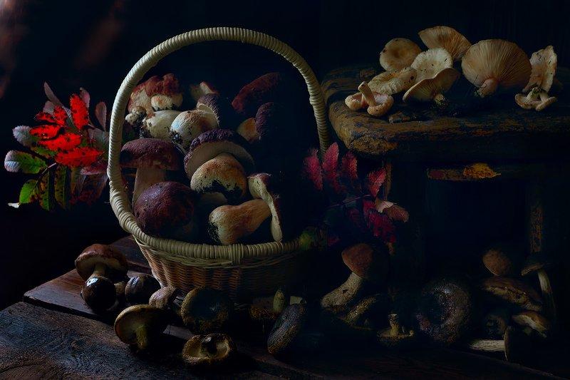 осень, грибы, белый гриб, боровик, подберёзовик, волнушки, чёрный груздь Вот и осень...photo preview