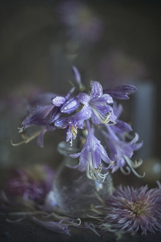 букет цветов, сиреневые, крупный план Сиреневые.....photo preview