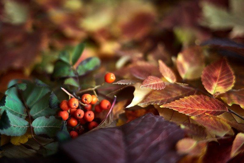 южный урал,оренбургская область, орск, новотроицк, Осеннее настроениеphoto preview