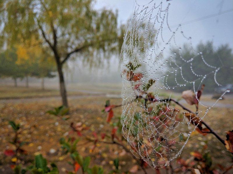 осень,макро,капля,паутина,ракурс,утро,настроение,сеть,вода,влага,парк, Приметы осениphoto preview