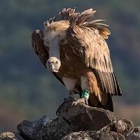 Portrait of a photographer (avatar) Славов Георги (Georgi Slavov)
