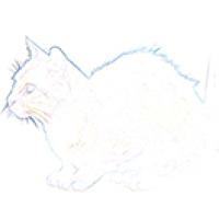 Portrait of a photographer (avatar)  selions (selions)