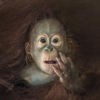 Portrait of a photographer (avatar) Chin Boon Leng (CHIN BOON LENG)